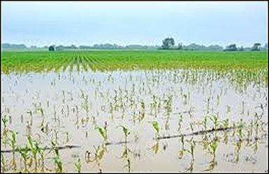 નર્મદા નદીના પાણીથી ૪ હજાર હેક્ટર જમીનમાં પાક નષ્ટ થયો