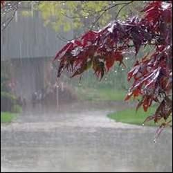 રાજ્યમાં આગામી પાંચ દિવસ દરમ્યાન સામાન્યથી મધ્યમ વરસાદ પડવાની શક્યતા