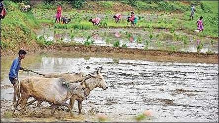 ખેડૂતોને ડ્રીપ ઈરીગેશનનો લાભ ન મળતા પાણીનો બગાડ થાય છે