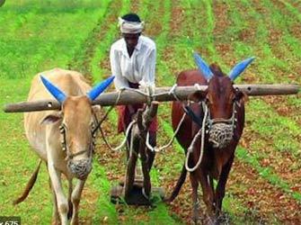 રાજ્યમાં જેઠ મહિનામાં વાવણી લાયક વરસાદથી ખેડૂતો ખુશ : હવે ઉઘાડ નીકળ્યોઃ  સપ્તાહ સુધી વરસાદની શક્યતા નહીવત્