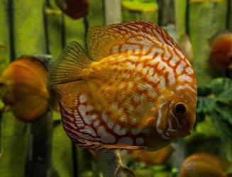 સાયન્સ સીટીના એક્વેટિક ગેલેરીમાં માછલી મૃત્યુ અંગે સ્પષ્ટતા: તમામ માછલીઓ સુરક્ષિત