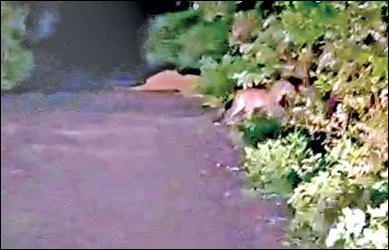 વડાલી તાલુકાના ભવાનગઢ જંગલમાં દીપડીના  બચ્ચા  દેખાતા લોકોમાં ભયનો માહોલ